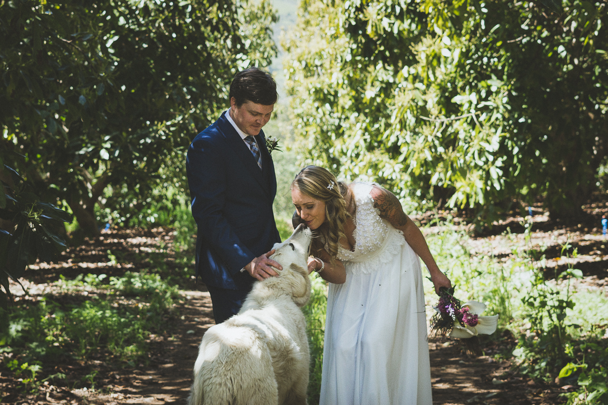 white dog kisses bride