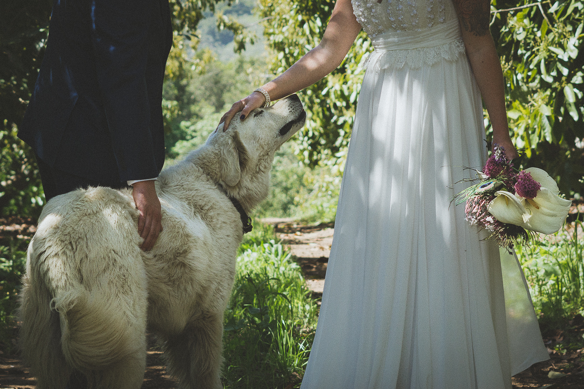 white dog gets love from bride and groom