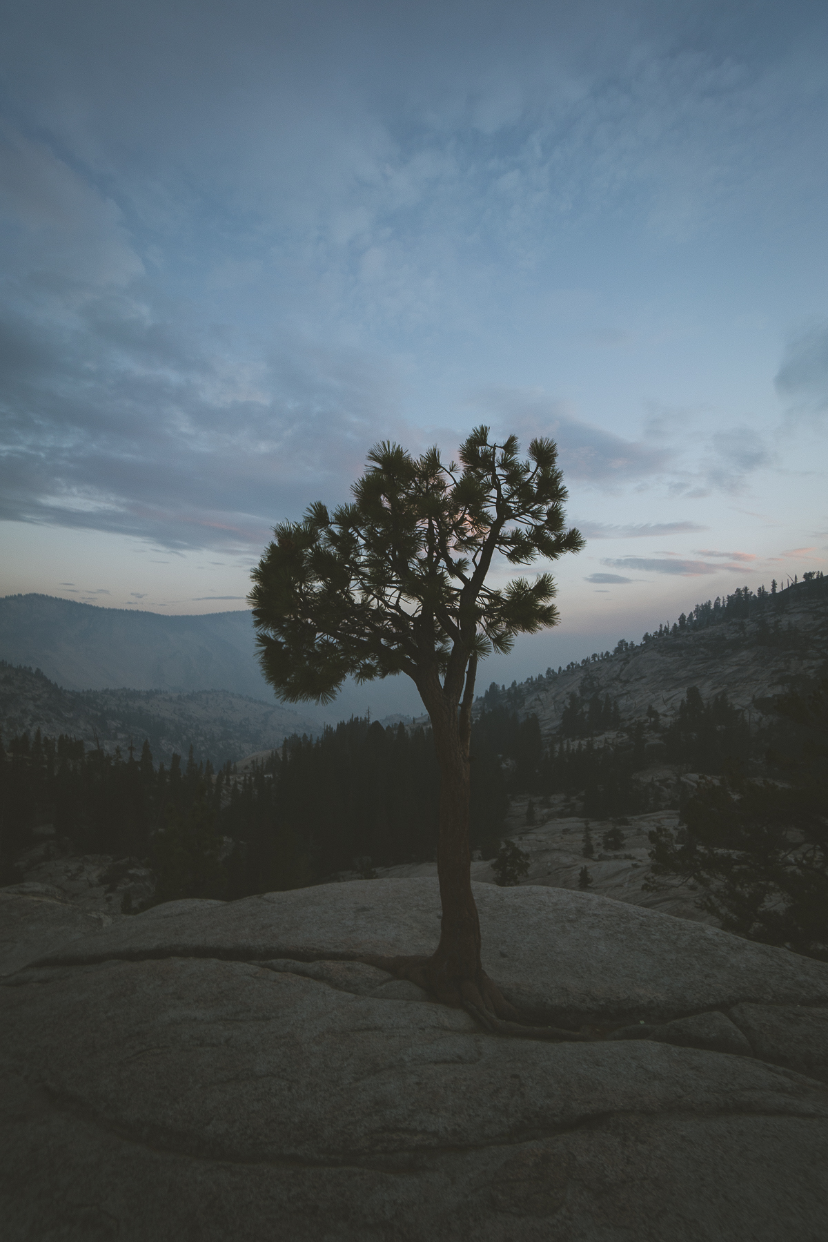 Yosemite trees during blue hour