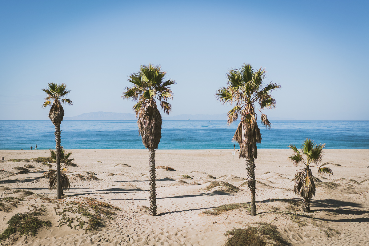 Palm trees and the beach